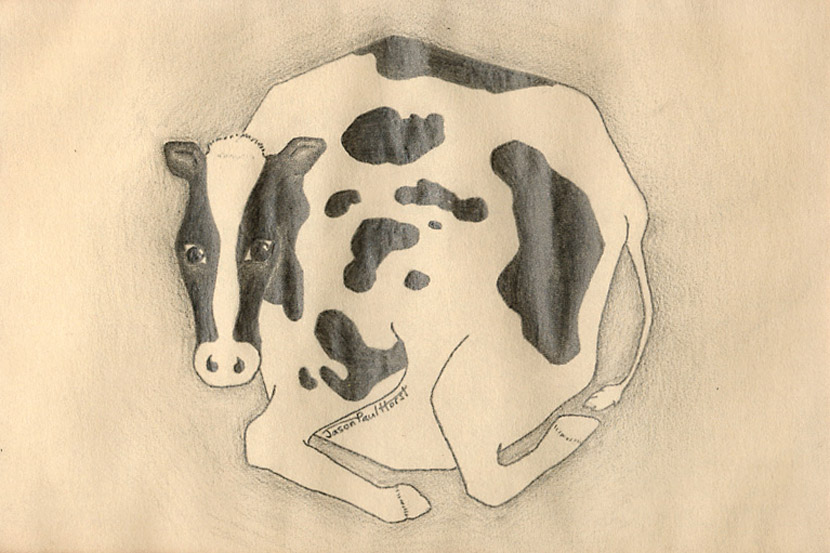 Pencil drawing of a round cow