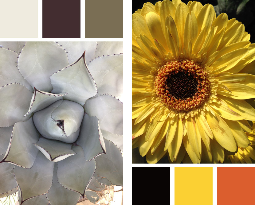 Color palettes found at Longwood Gardens